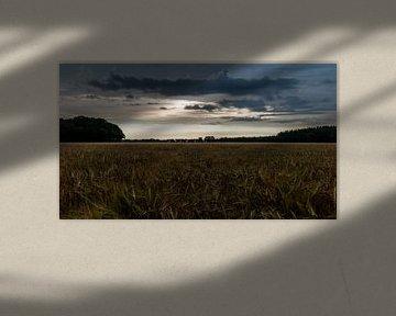 Zonsopkomst boven het graan van Timo Bergenhenegouwen
