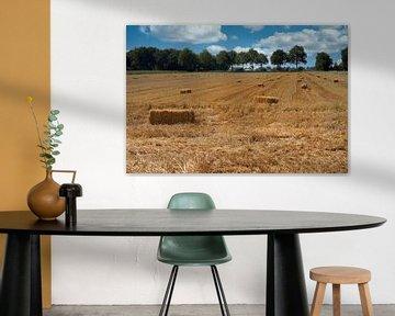 Das gemähte Getreidefeld von Drenthe von Meint Brookman