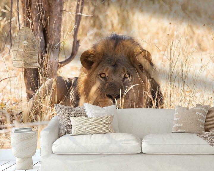 Beispiel fototapete: Männchen Löwe von GoWildGoNaturepictures