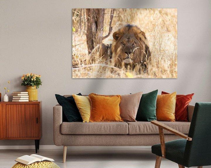 Beispiel: Männchen Löwe von GoWildGoNaturepictures