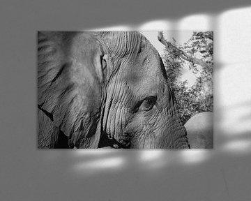 Elefant von GoWildGoNaturepictures