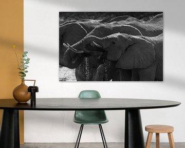 Trinkende Elefanten von GoWildGoNaturepictures