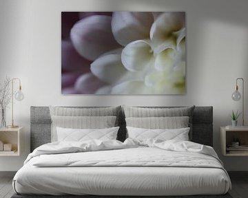 Wit-roze dahlia van Bärbel Severens