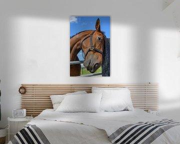 Als paarden konden praten van Walter Frisart