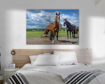 Stoere paarden bij een veulentje van Walter Frisart