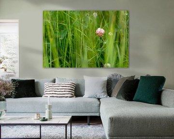 Blühender Klee von Rianne Fotografeert
