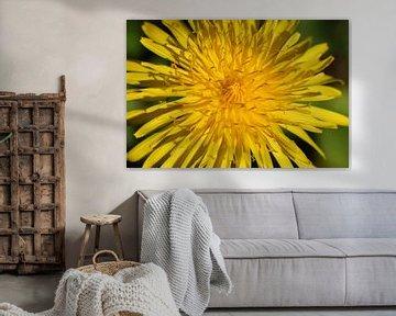 Schönes Gelb ist nicht hässlich: der Löwenzahn von Bärbel Severens