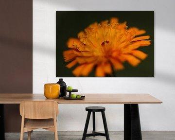 Orangefarbener Löwenzahn von Bärbel Severens