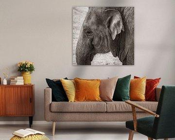 Elefant von Nico Boersma