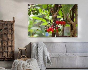 Natur, Beeren von Alexandra Verkerk