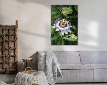 Natur, Pflanze, Passionsfrucht von Alexandra Verkerk