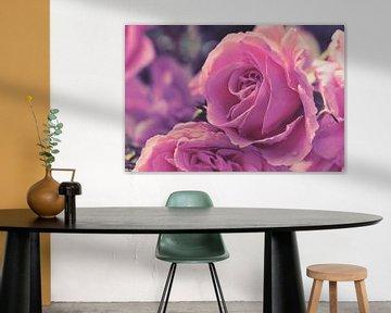 Matte stijl rozen van C. Nass