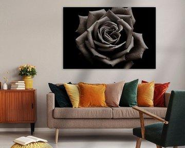 Rose im Copper Style von C. Nass