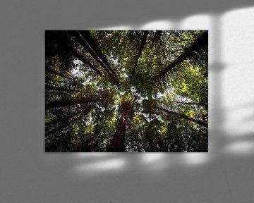Neuseeland - Rotorua - Bäume, die in den Himmel ragen von Rik Pijnenburg
