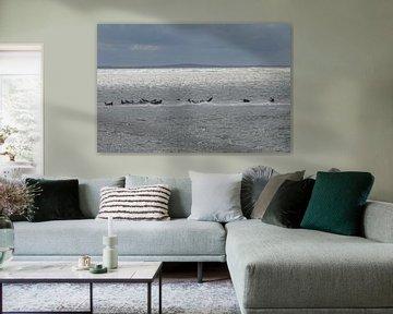 Zee, zeehonden en zon van Bart Houx