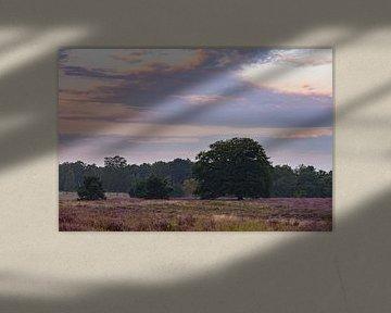 bloeiende heide onder mooie wolken van Tania Perneel