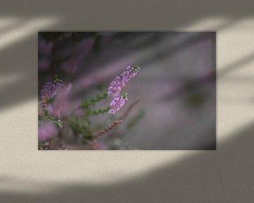 roze pracht van Tania Perneel