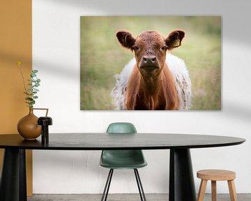 Hallo! Junge neugierige braune Clothfielder-Kuh von KB Design & Photography (Karen Brouwer)