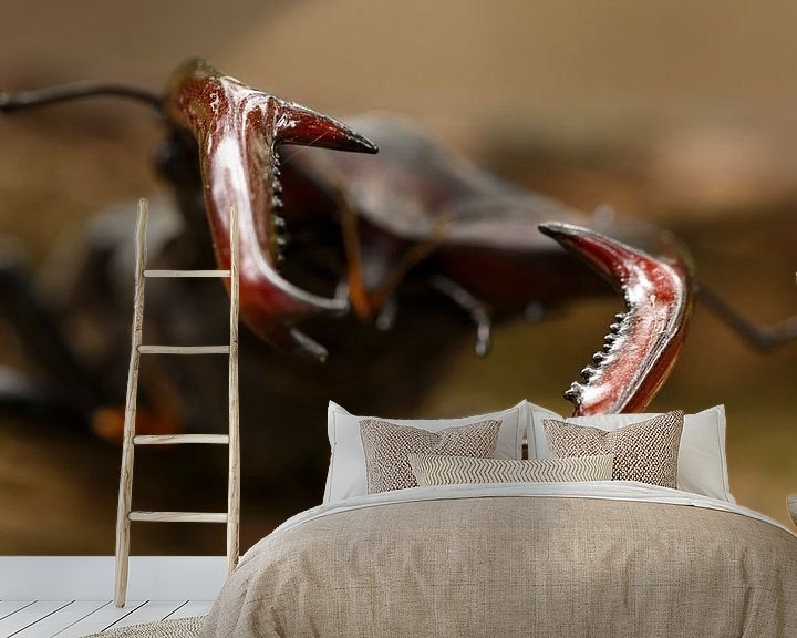 Sfeerimpressie behang: Het vliegend hert met z'n imposante kaken. van Paul Wendels