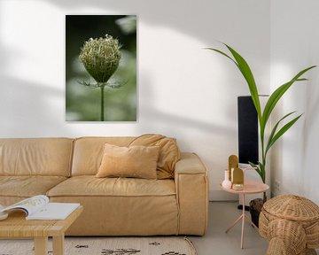 Zwiebel der Wilden Möhre (Daucus Carota) von KB Design & Photography (Karen Brouwer)