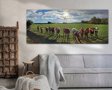 Panorama de vaches sur un pâturage au coucher du soleil sur MPfoto71
