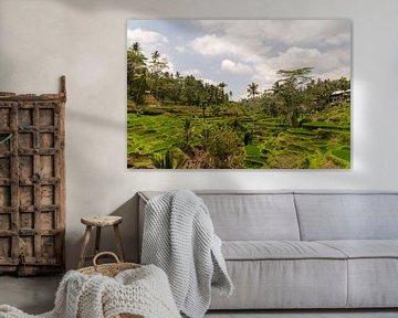 Rijstterrassen van Tegallalang, Bali, Indonesië van Zero Ten Studio