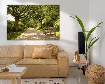 Répétition des bancs et des arbres I Jardins de Valloires I Picardie, France I Impression couleur