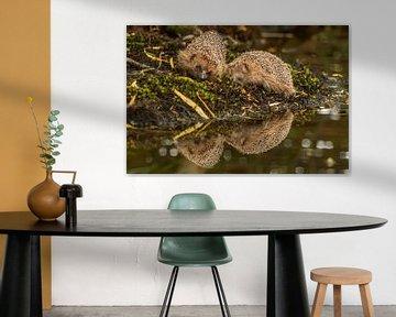 Egels in de spiegeling van Arie Jan van Termeij