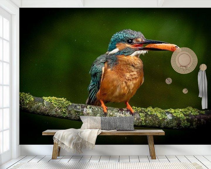 Beispiel fototapete: Eisvogel mit Fisch von Arie Jan van Termeij