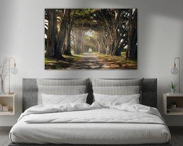 Cypress Tree Tunnel van Joris Pannemans - Loris Photography
