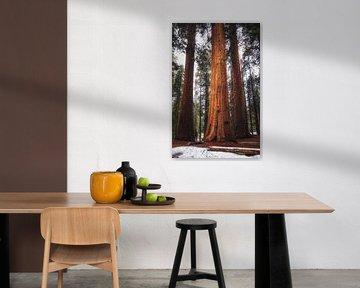 De koning onder de Sequoia's van Joris Pannemans - Loris Photography