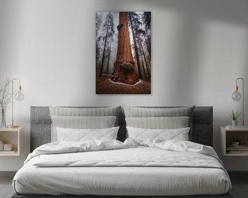 Het mistige Sequoia woud van Joris Pannemans - Loris Photography
