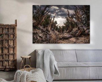 Het oeroude bos van Joris Pannemans - Loris Photography