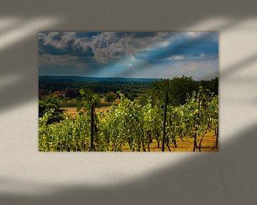 Weingut, Wijngaardberg, Belgien