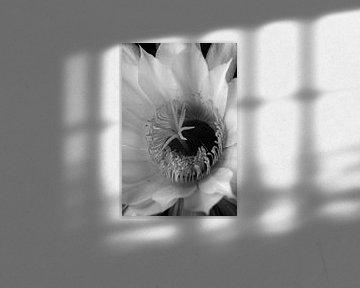 Voll in Blühte von Thilo Wagner