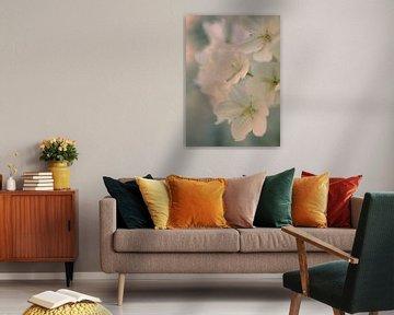 Blüte #3 von tim eshuis