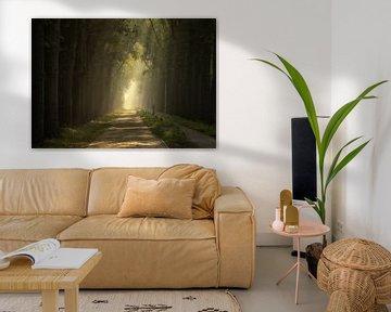 Lane of Light