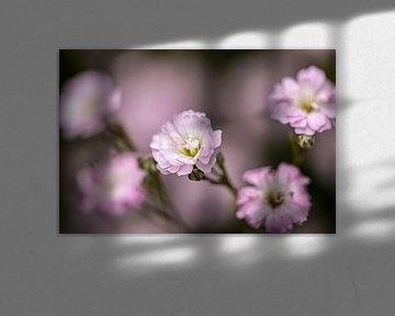 Seidig weiche Blumen von Francisco Dorsman