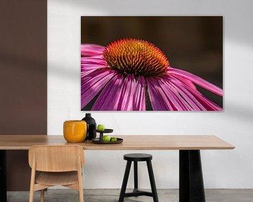 Echinacea von Francisco Dorsman