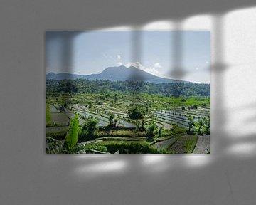 Rijstvelden op Bali, Indonesië - Azië van Liefde voor Reizen