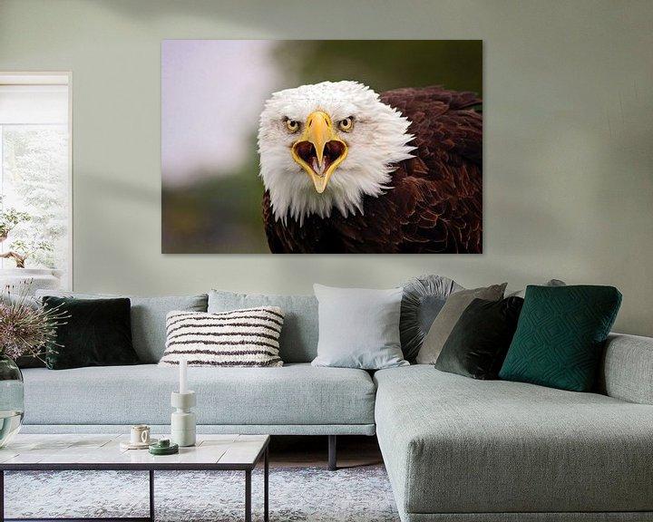 Beispiel: Weißkopf-Seeadler von gea strucks
