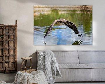 Seeadler am Wasser von gea strucks