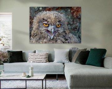 portrait d'une jeune chouette aigle sur Petra Vastenburg
