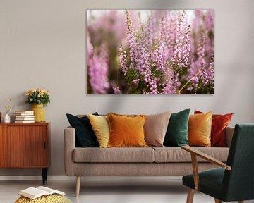 Heidekraut Blumen von Karijn | Fine art Natuur en Reis Fotografie