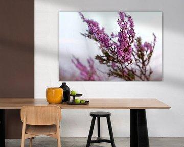 Blühende violette Heidekrautblüten. von Karijn | Fine art Natuur en Reis Fotografie