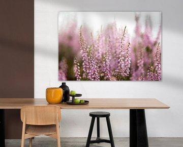 Blühende violette Heidekrautblüten von Karijn | Fine art Natuur en Reis Fotografie