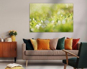Gras mit Tautropfen und einem schönen Bokeh von KB Design & Photography (Karen Brouwer)
