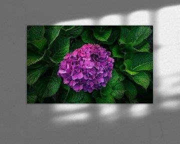 Flower Power von Alexander Dorn