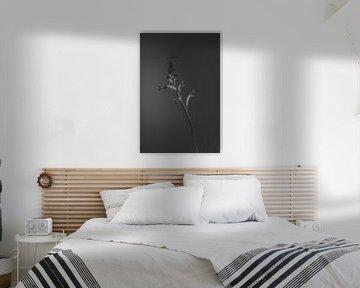 schwarze Blume von Carla Van Iersel