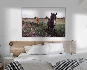 Wilde paarden tussen paarse heide van Carla Van Iersel